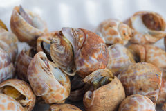 Baked snails Stock Photography