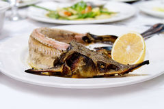 Baked sterlet fish on white plate Stock Photography