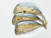 Baked Thai Mackerel on with background Stock Photo