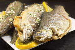 Baked trout fish served on a plate Royalty Free Stock Photos