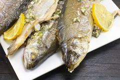 Baked trout fish served on a plate Stock Photos