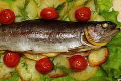 Baked trout. Organic whole trout cooked with vegetables  served for dinner stock photos