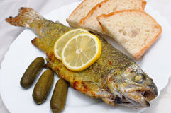 Baked trout on a plate Royalty Free Stock Photos