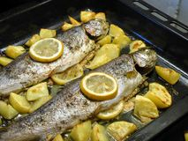 Baked trout with potatoes and lemons. stock photos