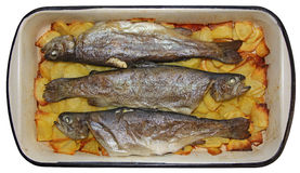 Baked trouts Stock Images