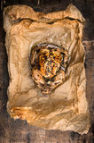 Baked whole chicken with rosemary in baking paper on old wooden table Royalty Free Stock Photography
