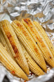 Baked young corn cobs Stock Photo