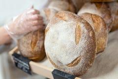 Baker& x27; 投入温暖的鲜美新近地被烘烤的面包的大面包s手在面包店商店或市场上 库存照片