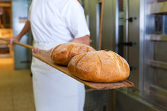 Baker baking bread showing the product. Baker baking fresh bread in the bakery showing it on the shovel Royalty Free Stock Photo