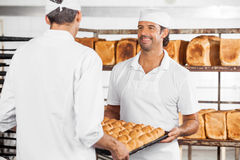 Baker With Colleague Carrying Bread Loaves In Tray. Smiling mid adult male baker with colleague carrying bread loaves in tray at bakery stock photography