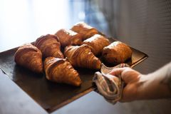 Baker holds tray with croissants in bakery oven