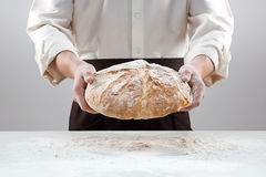 Baker man holding rustic organic loaf of bread in hands. Rural bakery on gray Royalty Free Stock Photo