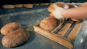 Baker puts fresh baked bread on the tray. 4K stock footage