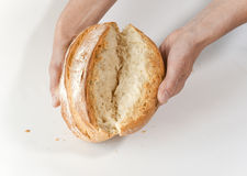 Baker's hands with broken white bread Royalty Free Stock Photography