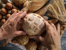 Baker`s hands hold fresh bread Stock Photos