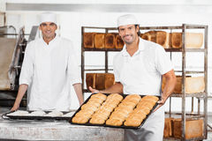 Baker Showing Breads In Baking Tray By Colleague Stock Image
