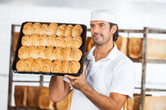 Baker Showing Breads In Baking Tray While Looking Away Royalty Free Stock Photo