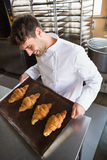Baker showing some croissants on a baking tray Royalty Free Stock Image