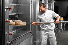 Baker taking out from the oven baked buckweat bread. Handsome baker in uniform taking out with shovel freshly baked buckweat bread from the oven at the stock image