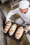 Baker taking tray of fresh bread out of oven. In the kitchen of the bakery Royalty Free Stock Photo