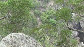 Bakers Creek Gorge, along Waterfall Way, NSW, Australia. This region of Australia, sustains an indigenous ecology named `dry rainforest`, that is World Heritage stock footage