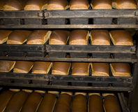 The bakery. Fresh bread just out of the oven Stock Images