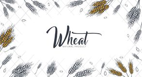 Bakery background with wheats. Linear graphic. Bread banner collection. Bread house. Vector illustration. stock images