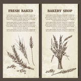 Bakery banner. Set of cards template. Hand drawn Wheat ears. Vector illustration in sketch style. Royalty Free Stock Images