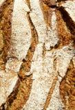 Bakery Bread Royalty Free Stock Image