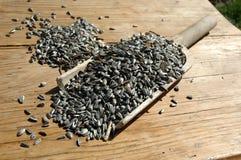 Bakery pan with sunflower seeds Stock Photos