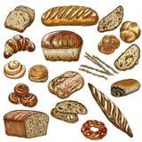 Bakery vector illustration. Hand drawn sketch, colored vector illustration