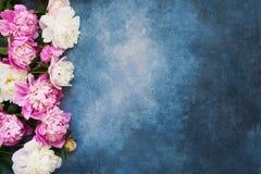 Bakground avec les pivoines blanches et roses Carte de voeux Copiez l'espace, vue sup?rieure photo stock
