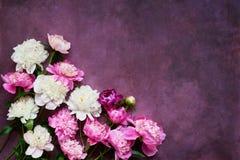 Bakground avec les pivoines blanches et roses Configuration plate pour des invitations, félicitations Carte de voeux Copiez l'esp images stock