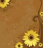 Bakground com girassol ilustração royalty free