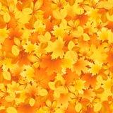 Bakground van de herfstbladeren Stock Afbeelding