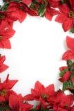 bakgrund över vita julstjärnor arkivfoton