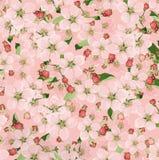 Bakgrund av äppleblommor Arkivfoto