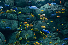 Bakgrund av afrikanska fiskar Arkivfoto