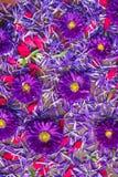 Bakgrund av blåa och röda blommor Royaltyfria Foton