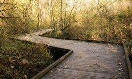 Bakgrund av bron/vägen i nedgångskogen, glädje, peacefullness, meditation, zen, tillstånd av meningen arkivbild