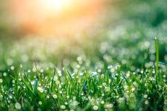 Bakgrund av daggdroppar på ljust - grönt gräs med solstrålen Arkivbild