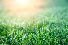 Bakgrund av daggdroppar på ljust - grönt gräs med solstrålen Royaltyfri Fotografi