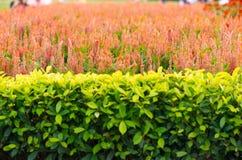 Bakgrund av dekorativa dekorativa trädgårdar Royaltyfria Bilder