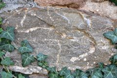 Bakgrund av den gamla stenväggen och bestigaväxten royaltyfria bilder