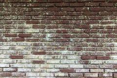 Bakgrund av den gamla tappningtegelstenväggen Royaltyfri Fotografi
