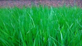 Bakgrund av den läckra gröna gräsmattan Royaltyfri Foto