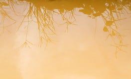 Bakgrund av den leriga vattenreflexionen av gräs i vatten Royaltyfria Bilder