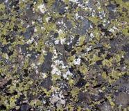 Bakgrund av den naturliga stenen som filmas på monteringen Iremel Royaltyfri Fotografi