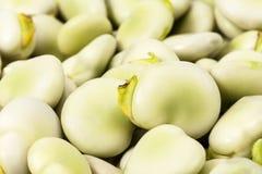 Bakgrund av den nya gröna bondbönan, slut upp Royaltyfri Fotografi
