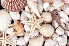 Bakgrund av den olika snälla havsskal, sjöstjärnan och seahorsen Royaltyfri Bild